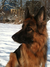 Anima-Balance: Hund