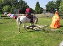 Ein Pferd, das dem Reiter vertraut, nimmt jedes Hindernis!