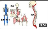 骨盤と頭蓋骨 後編