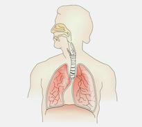Die Schnarch- Ursachen sind in den Atemwegen zu finden.