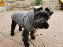 Zufriedenheit im Hundesalon in Erfurt - nach der  Hundepflege