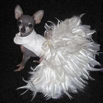 всё для праздника собак, обувь для собак, собака, маленькая собачка, одежда для собак, украшения для собак, обувь для собак