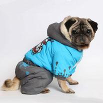 Одежда для мопсов и французов, купить, собака, маленькая собачка, одежда для собак, LIMARGY, FORMYDOG, OSSO