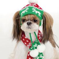 Головные уборы для собак, шапки для собак, шарфы для собак, купить,  собака, маленькая собачка, одежда для собак, LIMARGY, FORMYDOG, ТУЗИК