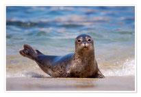 Klasse 4 - Die Robben