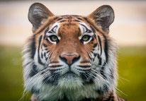 Klasse 3 - Die Tiger