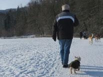 Senior auf Hundespaziergang mit West Highland Terrier