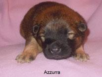 Nr. 3 - AZZURRA von Arrasino-Austria