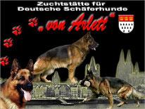 Hundeschule Köln