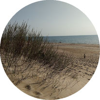 Litauen Strand