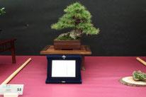 Larice - Associazione Bonsai il Moro - 2° premio chuhin