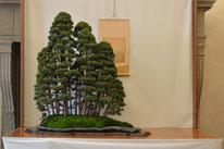 Boschetto ginepri chinensis - Ass. Arte e Cultura Bergamo Bonsai - Premio bonsai più votato dal pubblico