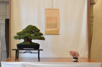 Azalea - Mizuchi Bonsai Club - Premio Bonsai do Groane Bonsai