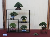 Composizione shohin - Jikan-en - 3° premio chuhin
