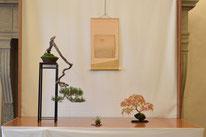 Pino silvestre - Bonsai Club Verbania - 3° premio chuhin