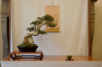 Olivastro - Studio Botanico - 3° premio latifoglie