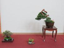 Composizione chuhin con juniperus chinensis - Jikan-en - 2° premio chuhin