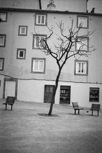 jeromedevismes. un arbra au milieu d'une place dans la ville de Porto, pour se poser