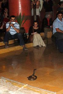 Là, dans un hôtel d'Agadir. Est-ce là la place d'un animal sauvage qui ne demande qu'à fuir ses bourreaux? @Michel Aymerich