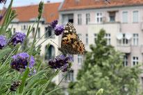 Foto:NABU/Hanna Pfüller