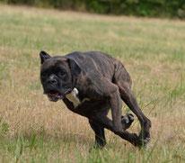 L'activité physique du chien : effets sur le comportement du chien