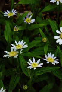 美しき山里中津川花々を訪ねて芽吹き新緑