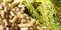 Biomasse Wolf Installateur