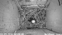 Das erste Ei ist da! 09.03.2018