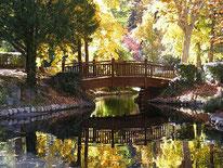 Vernet les Bains : village arboretum