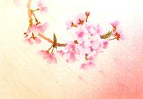 Sakura-8 20x30cm 2016