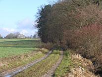 """Wanderweg """"Gelbkreuz"""" bei Tauchersreuth"""