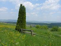 Ruhebank bei Tauchersreuth