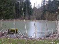 Fischweiher bei Günthersbühl