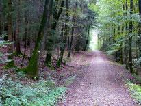 Forstweg nach Nuschelberg