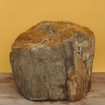 Versteinertes Holz. Höhe ca. 38cm, Durchmesser ca. 45cm. Stirnfläche poliert. Sehr schönes Stück. 127 Kg, Preis: 1'145.-