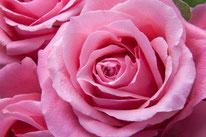 Naturheil Pflanzen Rose