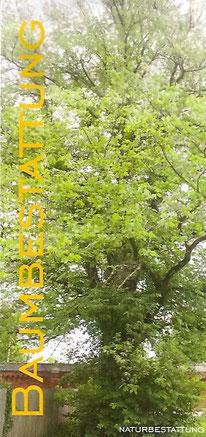 Folder-Cover: Baumbestattung