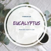 Etherische olie van eucalyptus