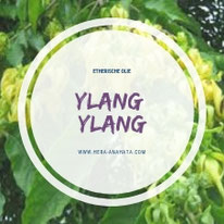 Etherische olie Ylang Ylang