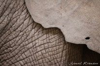 Tierfotografie - Wildlife - Animals