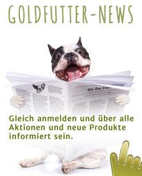 Bulldogge liest Goldfutter-News