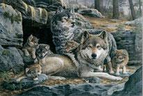 Das Wolfmagazin von Elli H. Radinger