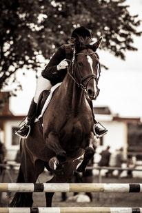Pferdefotografie in Hamburg und Norddeutschland