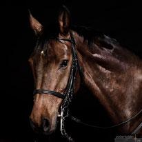 Fotoshooting mit Pferd