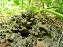 Ameisenbau in der Erde, © Mag. Angelika Ficenc