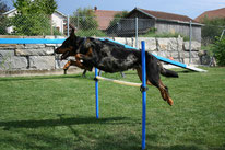 Cours d'agility, dog dancing