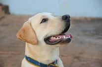 Cours privé pour chien