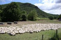 offre groupes electrogènes pour éleveurs - AEP