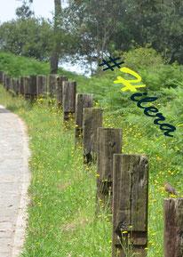 Las caprichosas #Hileras que algunas veces marcan nuestro camino a seguir