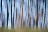 Sebastian Vogel, vogel-naturfoto, wald, wischer, winter